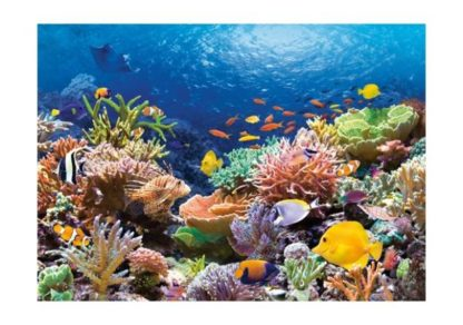 Koralliriutta___Coral_Reef