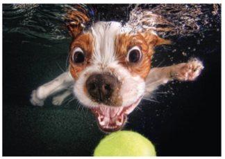 Puppy_underwater