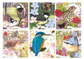 RSPB___Garden_Birds