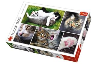 Collage___Cats_____Puzzle_1_500_pieces___